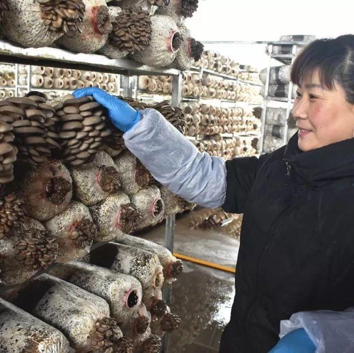 """【走乡村看振兴】莱阳柏林庄""""长在空中的蘑菇""""新春再""""生金"""""""