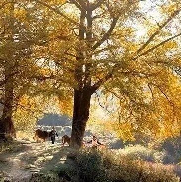 【收藏】信阳十大赏秋地!新县就有两个,家乡的秋天这么美,你去过几个?