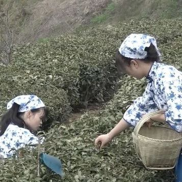 琴里知闻唯绿水,茶中故旧是香山。