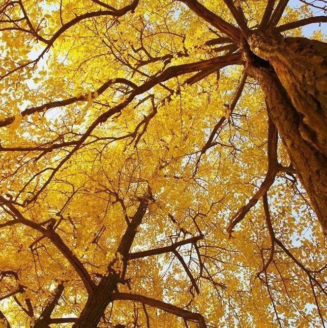 【风景】秋天是什么颜色?新县这样回答你……