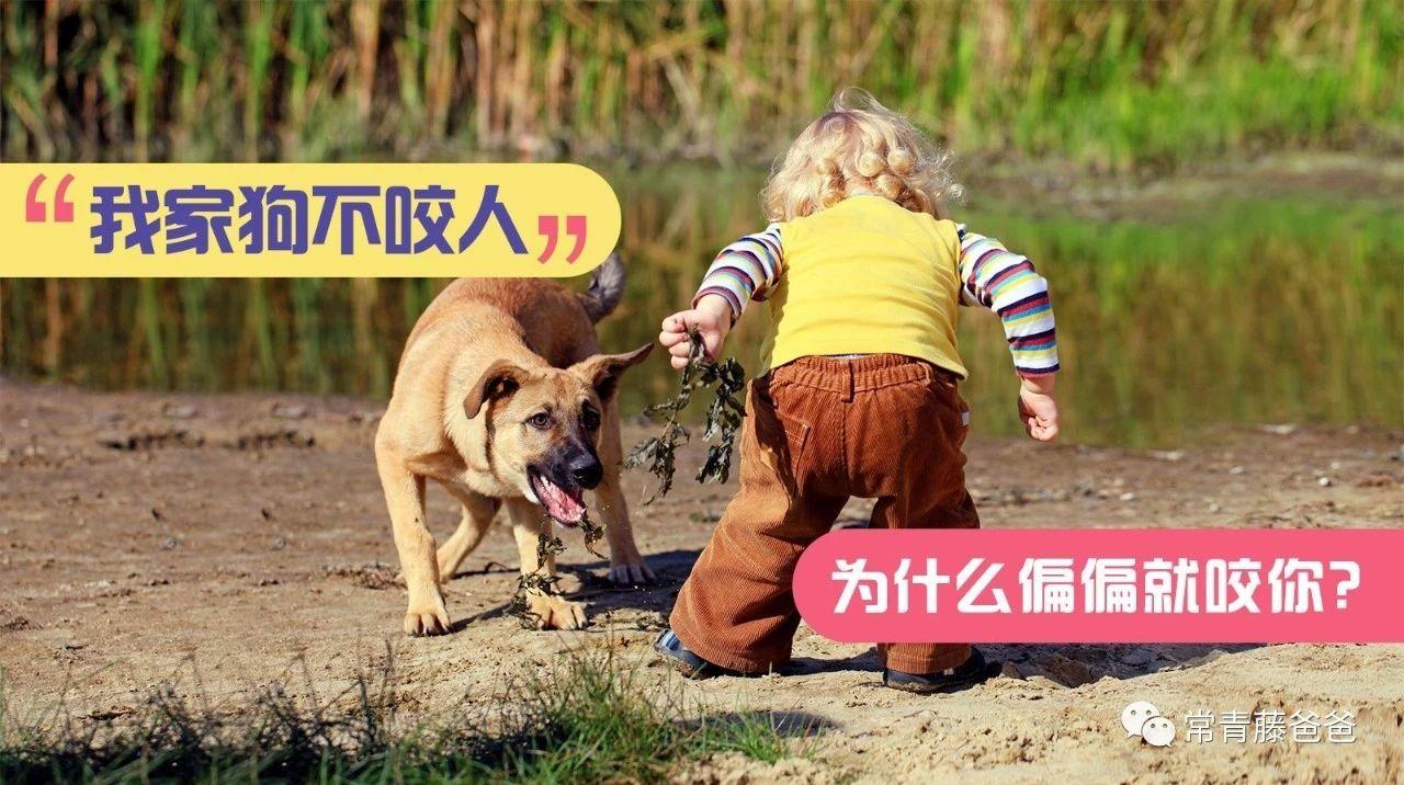 """每年被狗咬伤的人超千万!这份""""防咬宝典"""",高邑每个父母都要收好,比狂犬疫苗更靠谱!"""