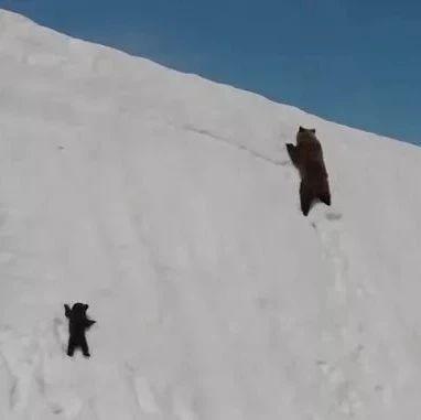 你被骗了|刷爆朋友圈的小熊爬山视频,背后竟是这样的残忍真相・・・