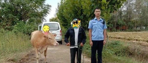 帮老人寻回走失的牛,帮群众寻回丢失的钱包...潢川民警热心助民暖人心