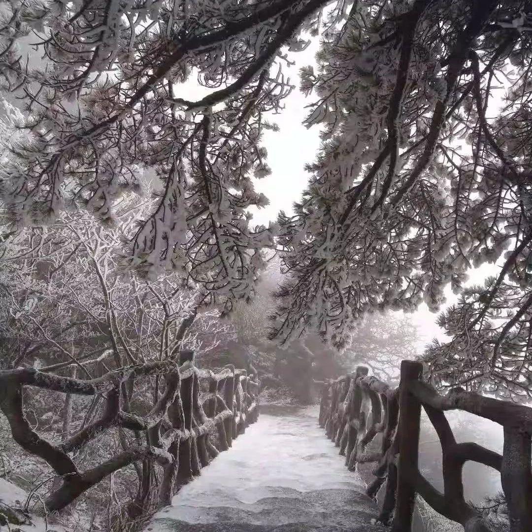 徽拍|立冬刚过,天堂寨山顶出现雾凇奇观