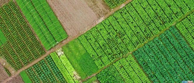 """""""干饭人""""请放心,今年泸州粮食总产量要达233万吨"""