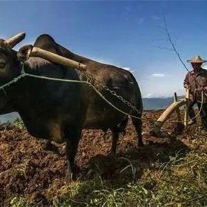 农耕地也要交税?这几类情况,农民要心中有数!