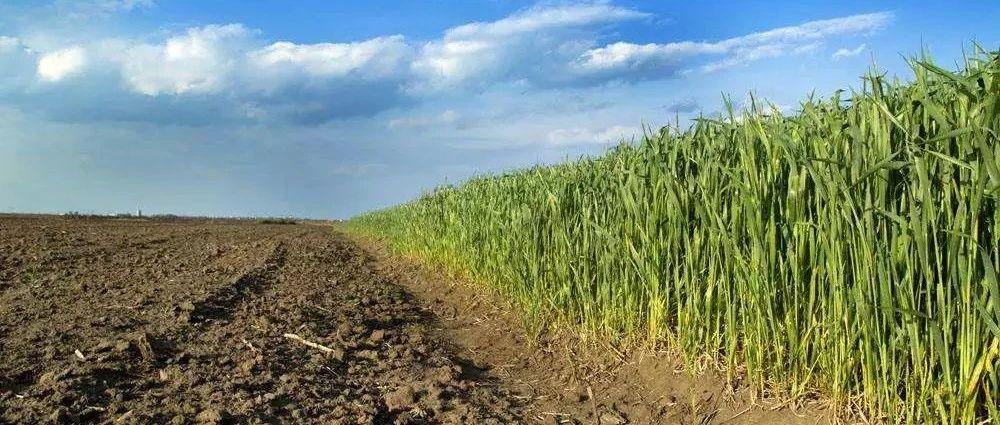 土地确权结束后,农民朋友将有这几条选择,但是也有人损失几十万!快看看有你么?