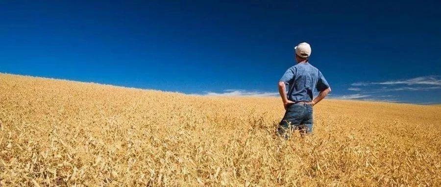 """农村城镇化后,我的土地咋办?我还能享受到""""农民""""身份的红利吗?"""
