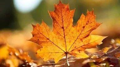 如果你在秋天到来