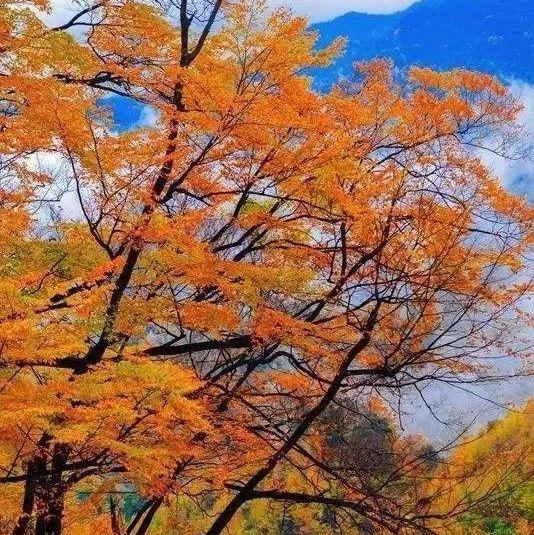 光雾山红叶节来了!10月18日将盛大开幕