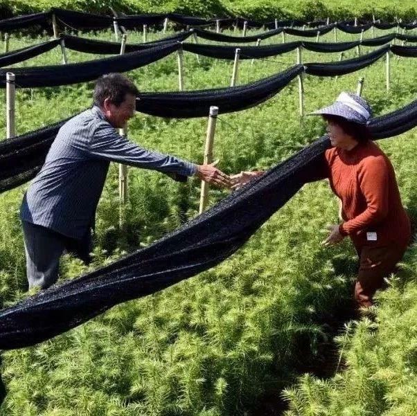 《全国新型职业农民发展报告》出炉!看点在这里!