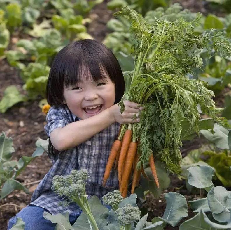 """【视野】都市农业这么搞,国外十种创意新模式,个个""""钱途无限""""!"""