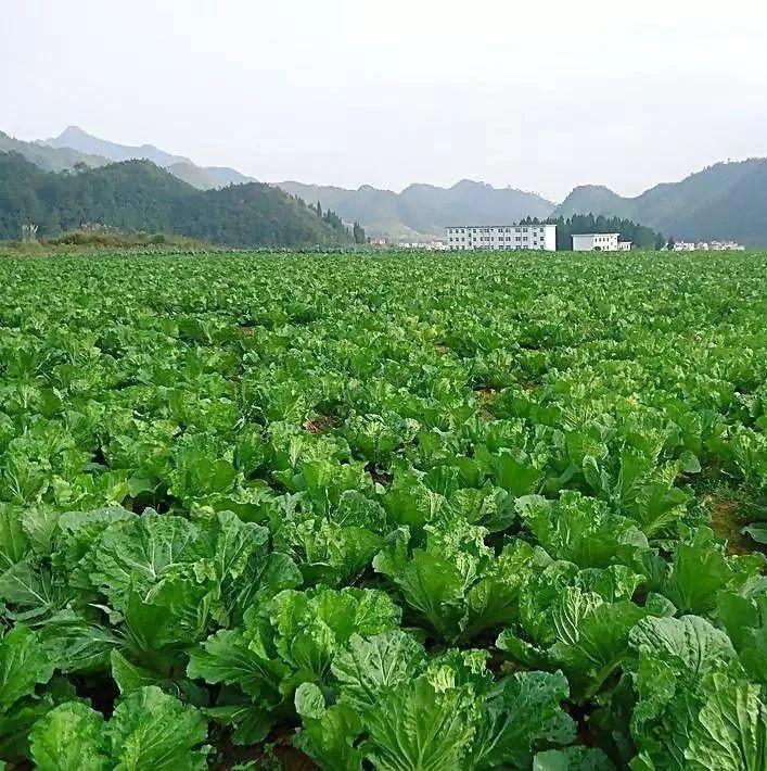 【收藏】十二种方法助你预防蔬菜死苗!快看!