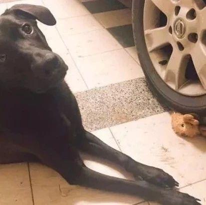 狗狗遛��回��,�s不愿意回屋,主人查看了一下后,笑��了!