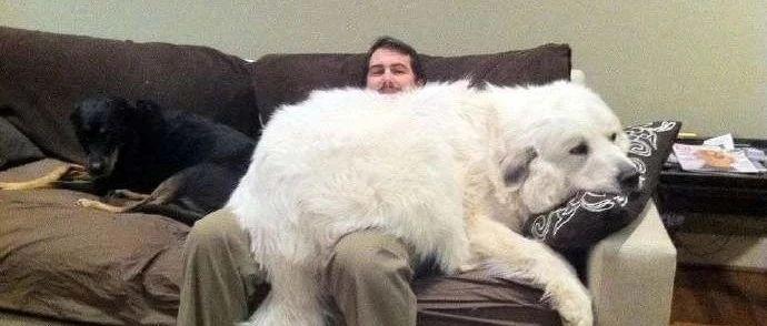 我�B的不是狗,是狗皮膏�!