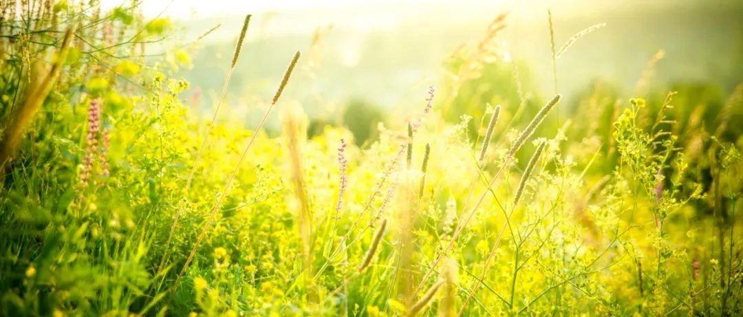春光明媚,花粉过敏怎么破?这12个问题都说清楚了