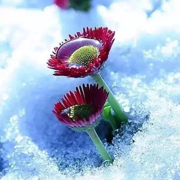 难得一见的雪中花和鸟,美到心醉!