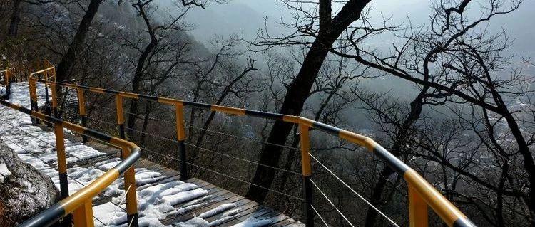 冬游金寨千年古树林~