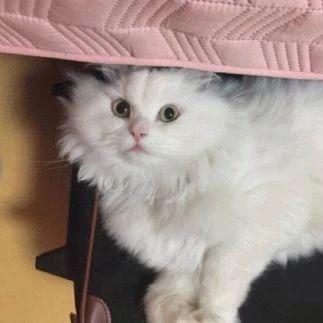 什么?这样漂亮白猫背后故事曾让人如此心酸...