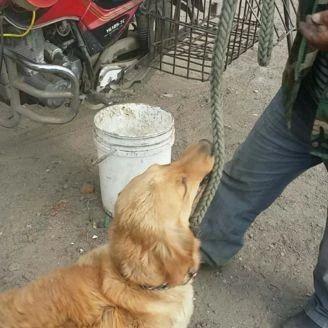 温暖无数人的狗狗,如今却要到被人要送到屠宰场?!