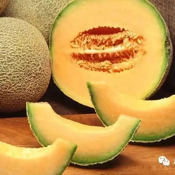 吃了瓜州蜜瓜,从此天下无瓜!