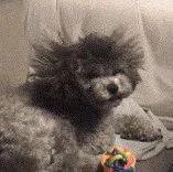 狗子新做了一个发型,镜头拉近一看,非常流行的锡?#25945;蹋?</a