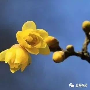 心依暖阳,静候花开