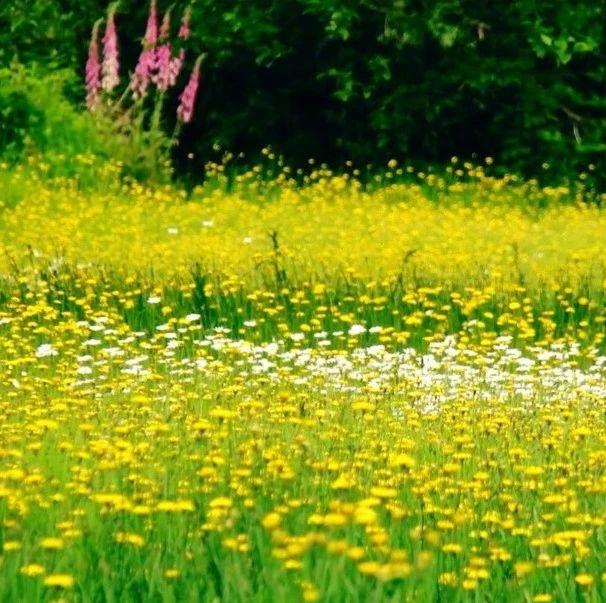 初春伊始,不负好时光!天河大峡谷步入万物复苏,春暖花开的好时节!