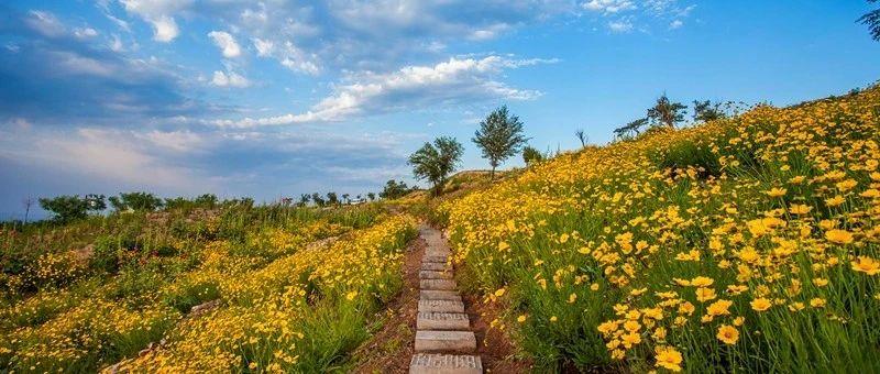 美翻了!洛阳初夏超适合骑行的路线曝光,环山环湖,美景不断…