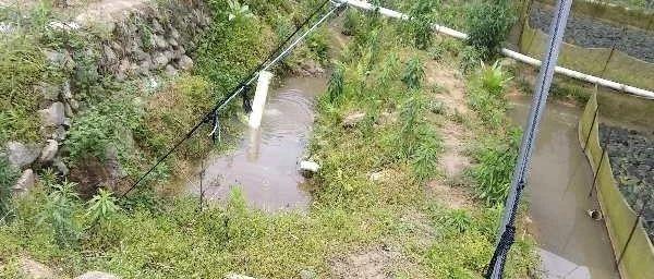 网友爆料:青蛙养殖基地污染严重,切盼解决