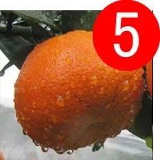 秋天不吃这个水果太亏了,1个等于5味药,功效惊人!