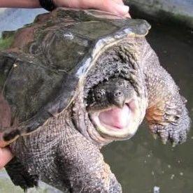 """稀奇!阜阳一地,居民发现一个""""装甲大龟""""!"""