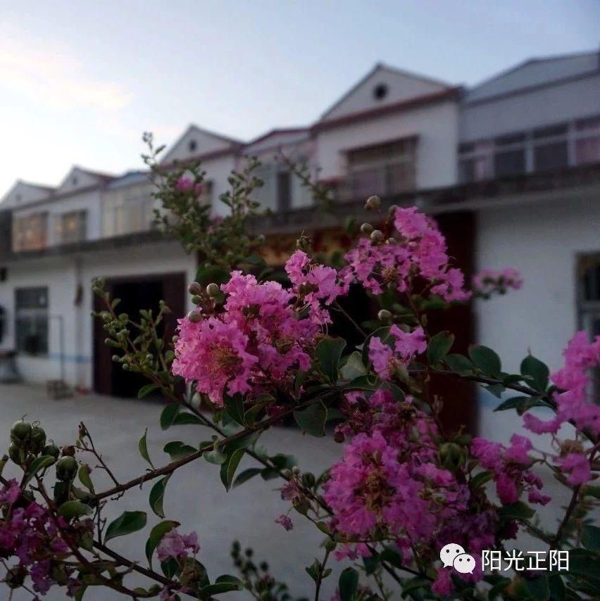【脱贫攻坚】王寨村处处开满幸福花
