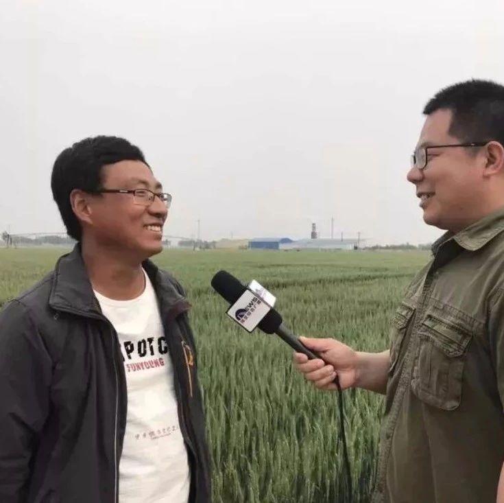 辛集80后农民,获得全省粮食亩产量的冠军