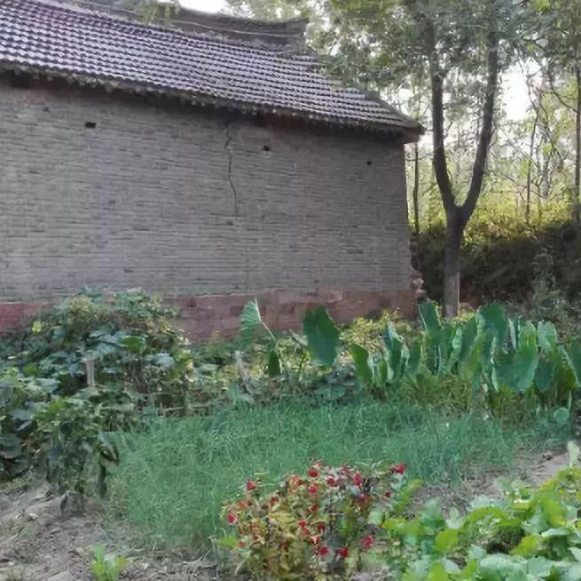 上蔡老家俺妈和屋后那片菜园.