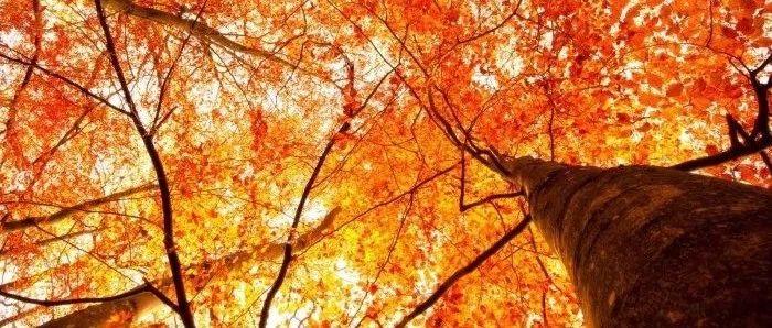 10月,一曲《相逢是首歌》,送给朋友们!