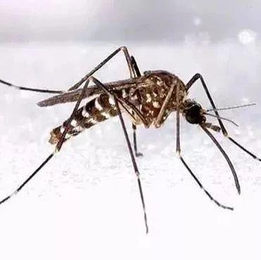 卧室放上它,1分钱不花,整个夏天不被蚊子咬!