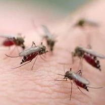 南溪人,教你几招,蚊子一个夏天都不敢进你房间!赶紧收藏!
