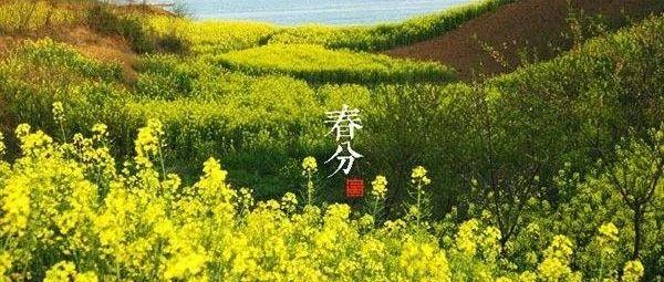 【未名国学丨未名乱弹15】春分――雪入春分省见稀,半开桃李不胜威!