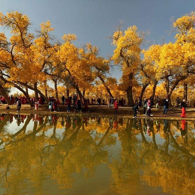 中国新闻网:额济纳胡杨林正值观赏季呈现梦幻般金黄色
