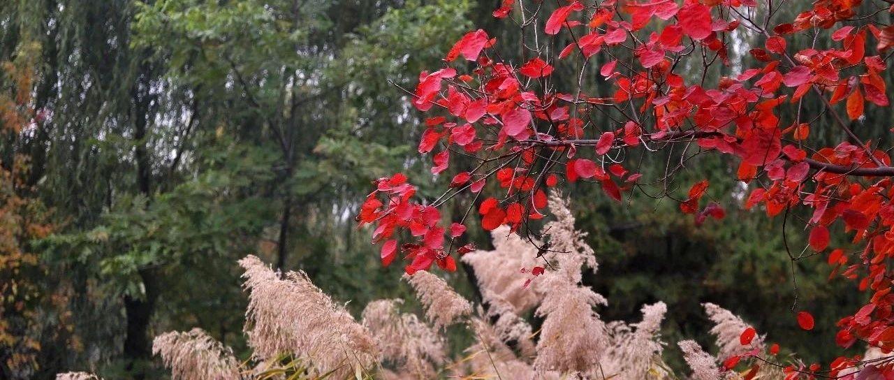 周末来郑州港区双鹤湖吧!打卡秋天最美的颜色