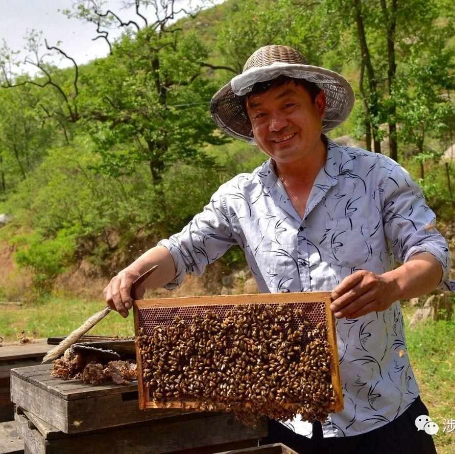 """以蜂为伴,涉县养蜂人的""""甜蜜""""事业!"""