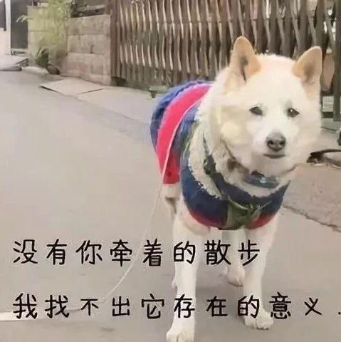遛狗不牵绳狗被撞死,该赔吗?主人:只是没牵绳而已,你赔我狗!