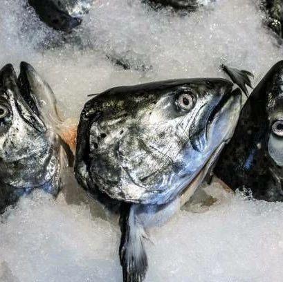 警惕!鱼的这个部位千万别乱吃,可能……南溪的你吃对了吗?