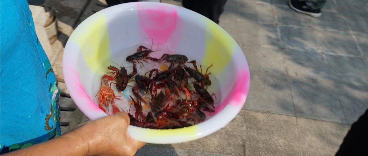 钓虾活动继续进行每周末与你相约水晶郦城!