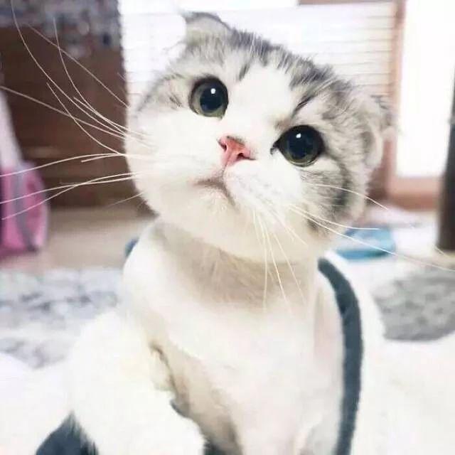 怎么用手机把宠物拍可爱?