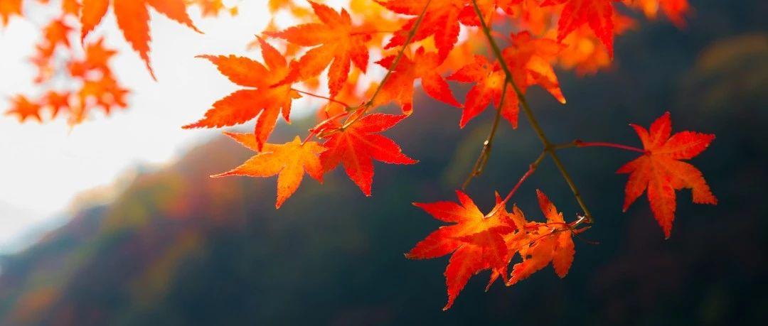 襄阳一秒入秋?!听说这些和秋天更配哦!