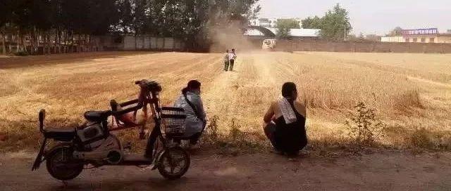收麦了!收麦现场!网友:看完想家了……