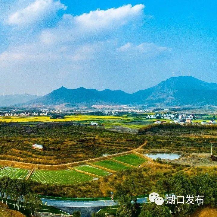 武山镇:发展中药材产业富民强镇