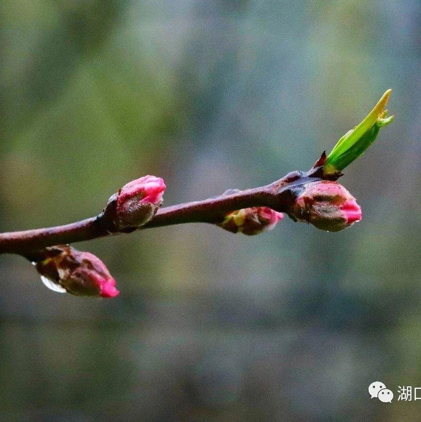 张青乡:八方逢春来桃花始盛开